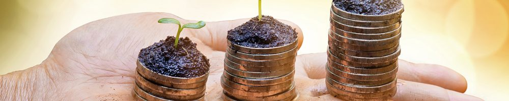 Hand holding trees growing on stacks of coins